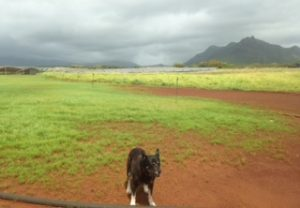 Dog and solar array and storage system